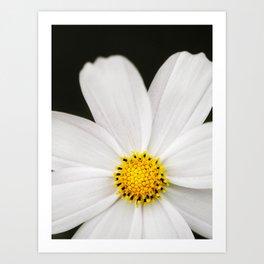 Daisy Drama - Flower Photography Art Print