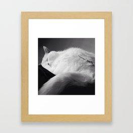SLEEPY Cat SUNDAYS Framed Art Print