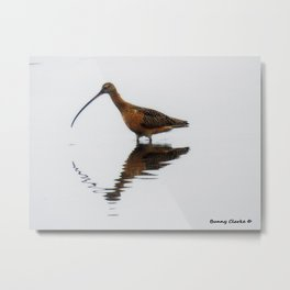 Long Billed Curlew Metal Print