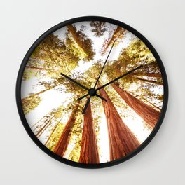 sequoia tree Wall Clock