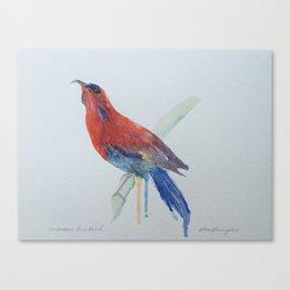 Watercolour Crimson Sunbird Canvas Print