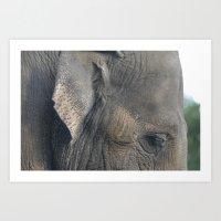 Elephant #1 Art Print