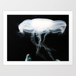 Jellyfish 5 Art Print