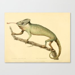 """""""The Chameleon"""" from the Leverian Collection, 1790s Canvas Print"""