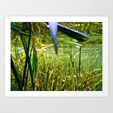 Submerged Grass Art Print