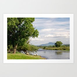 Grazing by the River Lune Art Print