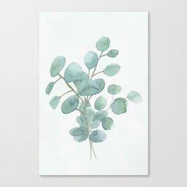 Eucalyptus Silver Dollar Canvas Print