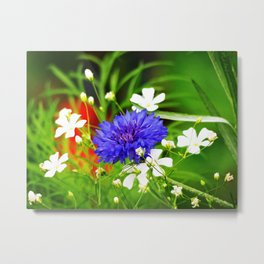 Baby's Breath and Bachelor Button Metal Print