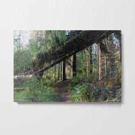 The path through taiga Metal Print