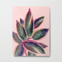 Pink Plant Ficus Metal Print