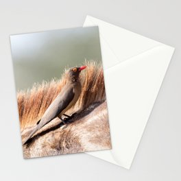 Oxpecker on a giraffe Stationery Cards