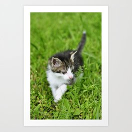 Kitten in the grass Art Print