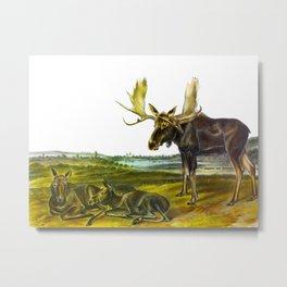 Moose Deer Vintage Hand Drawn Scientific Illustration Metal Print