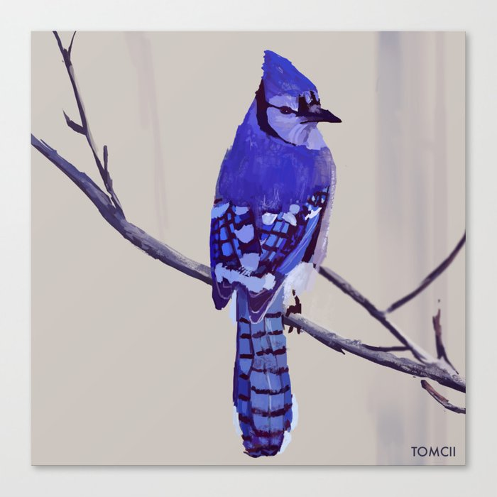 Blue Jay Bird Canvas Print