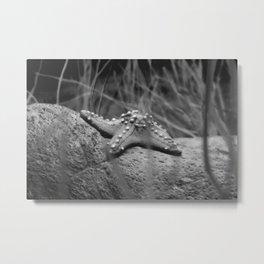 Black and white - starfish Metal Print