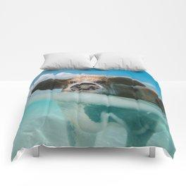 Pig in water Comforters