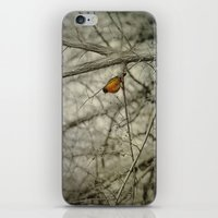 robin iPhone & iPod Skins featuring Robin by Dorothy Pinder