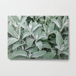 Texture Leaves Close-up Outdoors Natural Metal Print