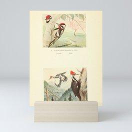 Yellow billied Sapsucker Pileated Woodpecker10 Mini Art Print