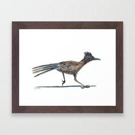 Watercolor Birds: Greater Roadrunner Framed Art Print