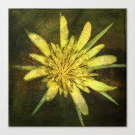 Wildflower ~ Goatsbeard ~ Tragopogon dubius ~ Ginkelmier Inspired Canvas Print