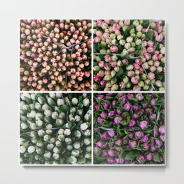 Tulips from Holland - pink and purple Metal Print