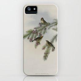 112 Regulus cristatus. Golden crested Wren or Kinglet iPhone Case