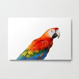 King of Colors Metal Print