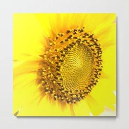sunflower photograph Metal Print