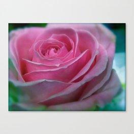 JANUARY ROSE (SOFT PINK GREEN ROSE) Canvas Print