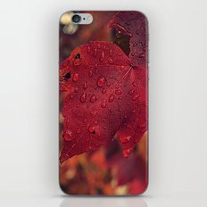Fall Drops II  iPhone & iPod Skin