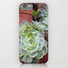 CANADA  - Succulents in Vancouver  iPhone 6s Slim Case