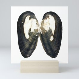 Thick Shelled River Mussel (Unio crassus) Mini Art Print