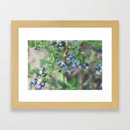 Blueberry Rain Framed Art Print
