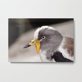 Grey Eyes Metal Print