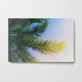 Palm tree frond Metal Print