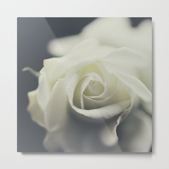 white rose II Metal Print