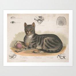 Vintage Illustration of a Domestic Cat (1872) Art Print