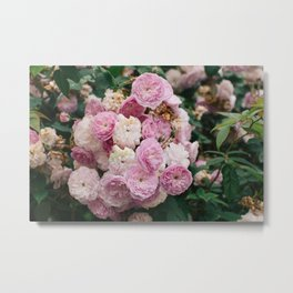 The smallest pink roses Metal Print
