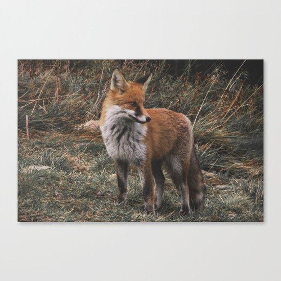 Feelin' Foxy Canvas Print