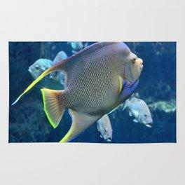 Tropical Blue Queen Angelfish Rug