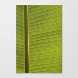 Banana Leaf II Canvas Print