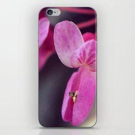 Concrete Pinks iPhone Skin