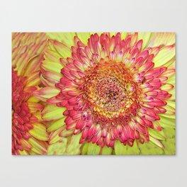 Flower yallow pink Canvas Print