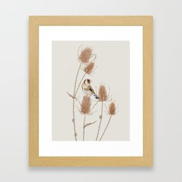 Goldfinch on teasels Framed Art Print