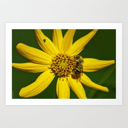The Bumble and The Sunflower #3 Art Print