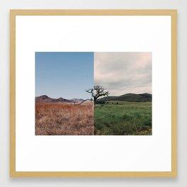 Same Tree, Different Season Framed Art Print