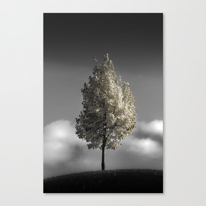 pleasant delirium Canvas Print