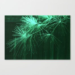 Pine tips -- green Canvas Print