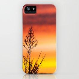 Simple Plant in Camargue Sunrise iPhone Case